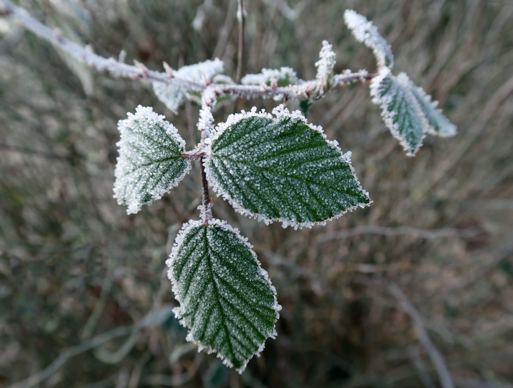 Givre - 19/01/2019