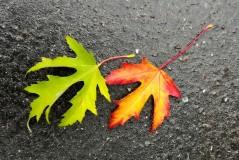 Usure de passage (26/10/2012)