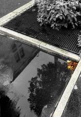 Libellule (19/08/2012)