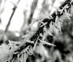 Effet d'hiver 03 (10/02/2013)