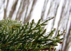 Pris dans la glace (20/01/2013)