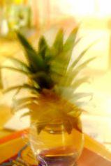 Feuilles d'ananas (10/01/2012)