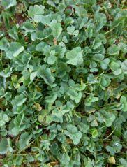 Trèfle à 4 feuilles? (vendredi 13/01/2012)