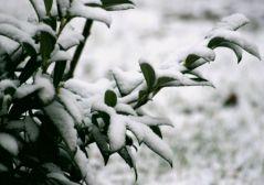 Première neige de l'année 2012 (30/01/2012)