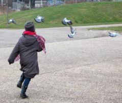 Chasse aux pigeons (28/01/2012)