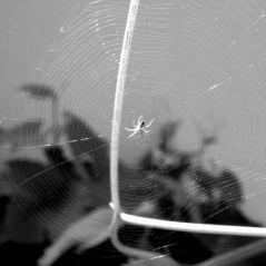 L'araignée fait sa toile (02/06/2012)
