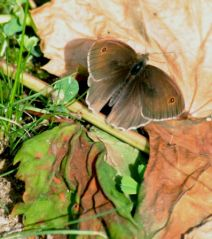Papillon (14/06/2012)