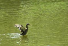 Apprendre à voler (03/07/2012)