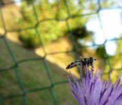 Pause fleur (25/07/2012)