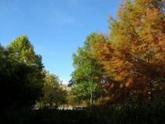 Premières couleurs d'Automne (18/10/2012)