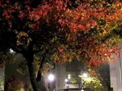 Automne la nuit (16/11/2012)