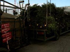 Vendeur de sapins (29/11/2012)